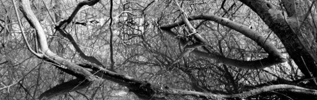 Naturen – Mickey Gjerris, Marianne Mortensen & Michael Vesterskov